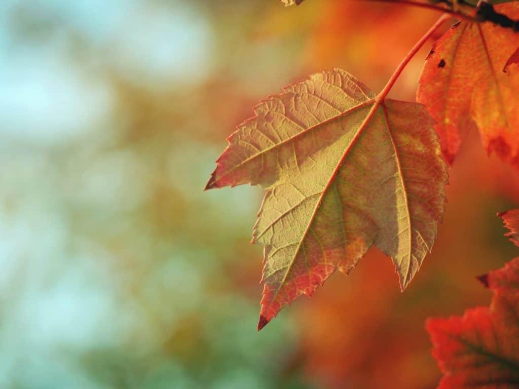 Leaf Mulchers