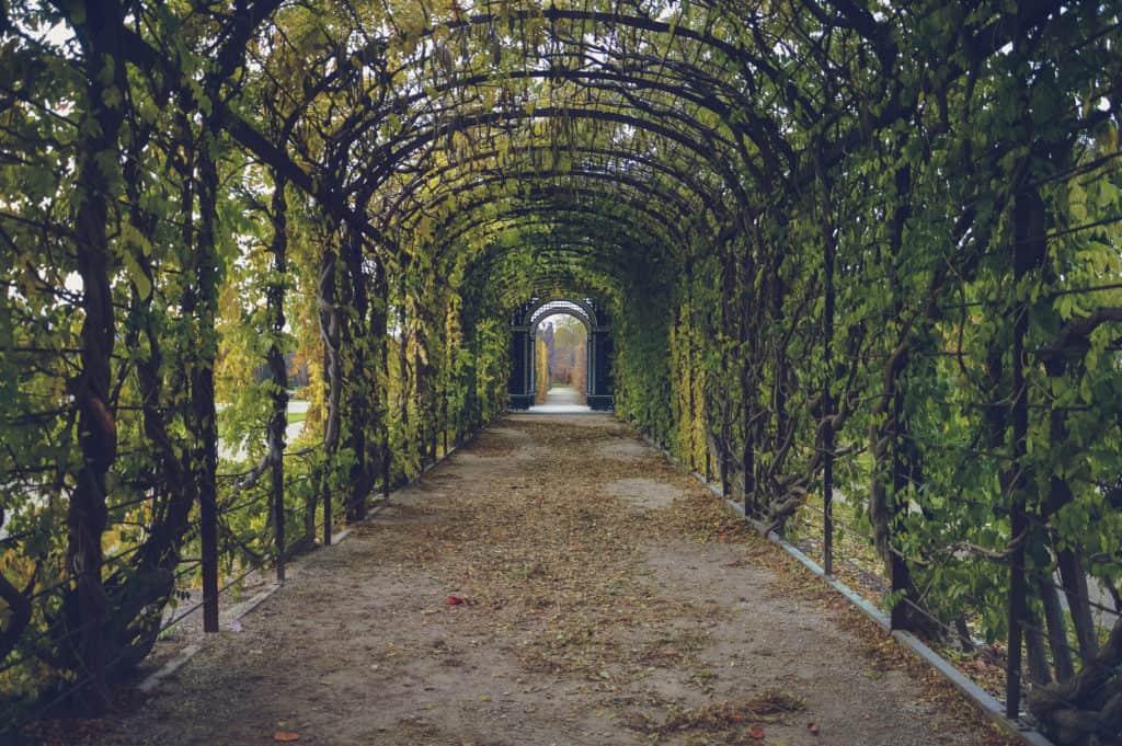 Garden Trellises And Arbors
