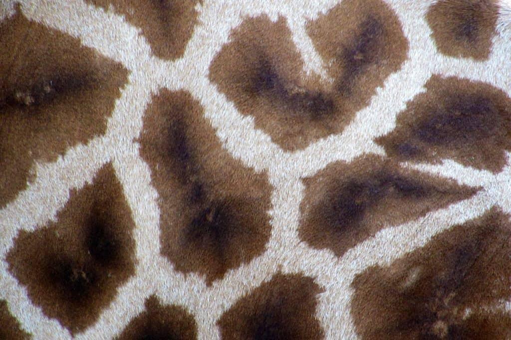 Carpet Padding Options