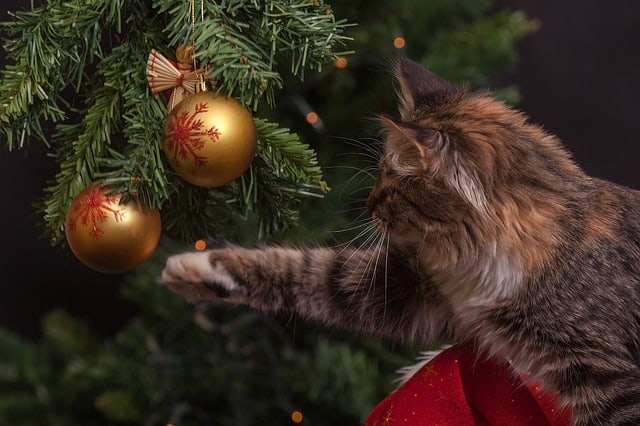 Christmas Tree Alternatives for Cat Owners